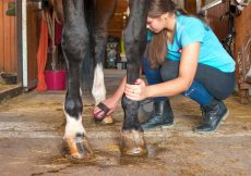 Cavaliere prenant soin sabot cheval